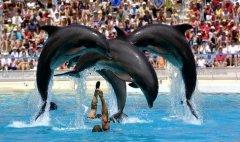 Zoo Aquarium - Acción y Eventos