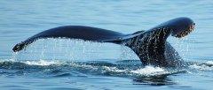 Avistamiento de Cetaceos - Accion y Eventos